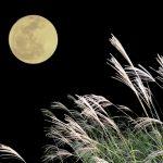 十五夜に月見団子を飾る由来と場所は?綺麗な積み方はできる?